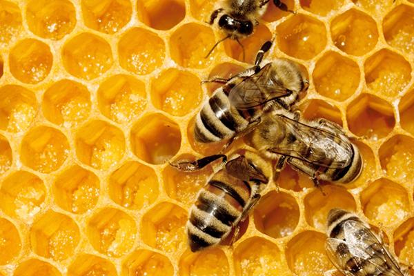 Până la 700,000 MDL: USAID/APM acordă granturi pentru a extinde exportul de miere autohtonă.