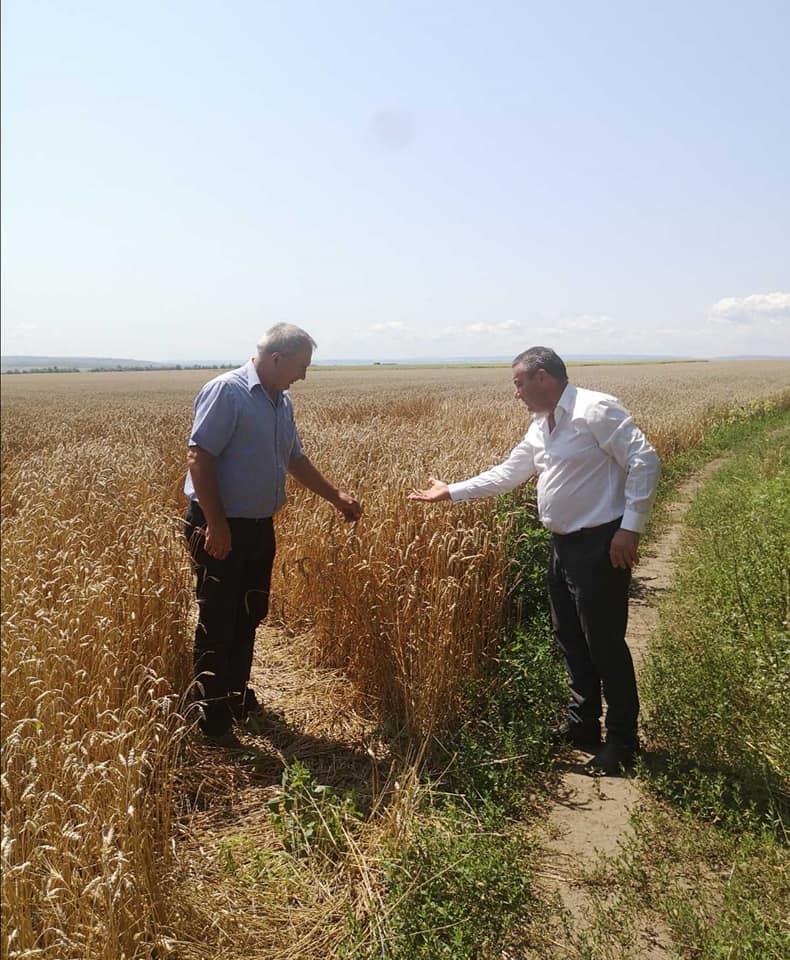 Campania de recoltare a culturilor din prima grupă (grâu, orz) este în plină desfășurare.